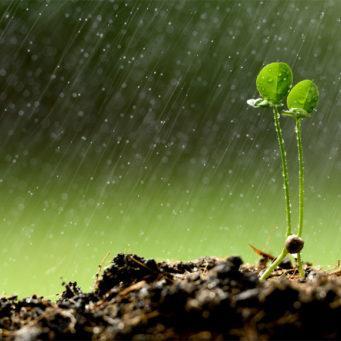 photo d'eau de pluie sur de jeunes pousses de plantes