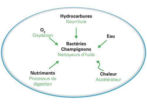 shcéma de biotope