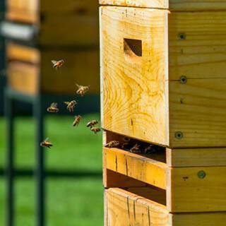 Image de ruches avec abeilles pour sensibiliser la biodiversité